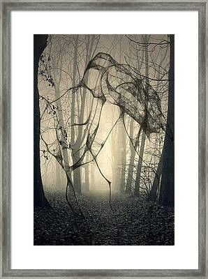 Roots That Hold  Framed Print by JC Photography and Art