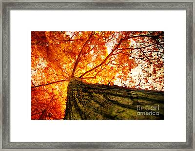 Roots To Branches IIi Framed Print by Floyd Menezes