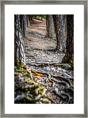 Framed Print featuring the photograph Rootway by Matti Ollikainen