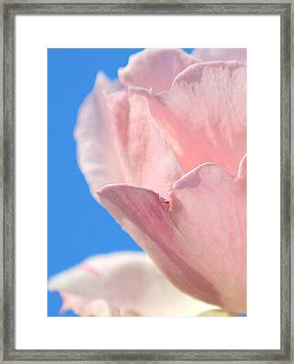 Rosa Del Cielo Framed Print by The Art Of Marilyn Ridoutt-Greene