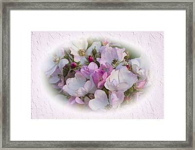 Rosa Framed Print by Elaine Teague
