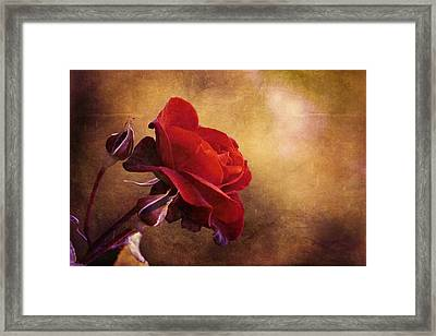 Rosa Rossa Framed Print
