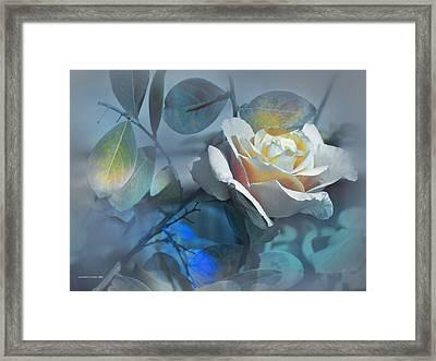 Rosas De Septiembre Framed Print by Alfonso Garcia