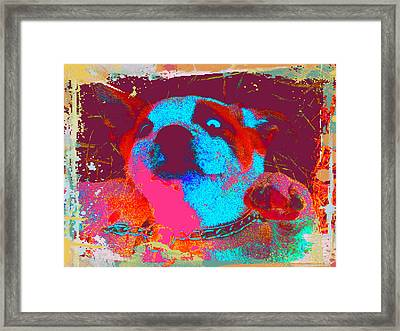 Rosco Belly Up Framed Print by Erica  Darknell