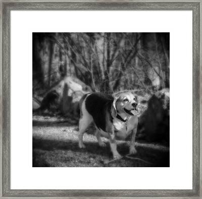 Roscoe Framed Print