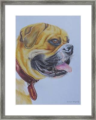 Roscoe The Boxer Framed Print by Golanv  Waya