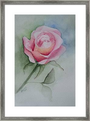 Rose 1 Framed Print by Nancy Edwards