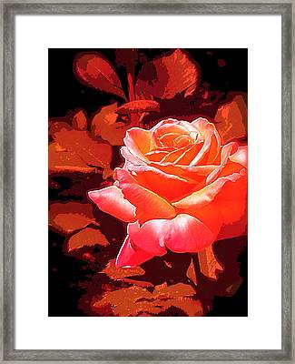 Rose 1 Framed Print by Pamela Cooper