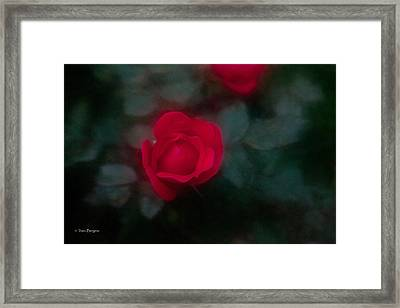 Framed Print featuring the photograph Rose 1 by Travis Burgess