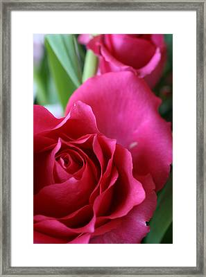 Rose 10 Framed Print