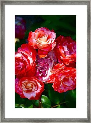 Rose 124 Framed Print by Pamela Cooper