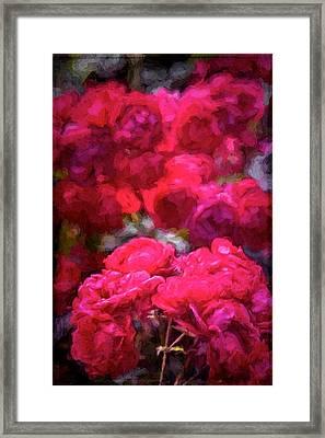 Rose 134 Framed Print by Pamela Cooper