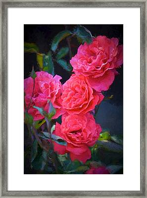 Rose 138 Framed Print by Pamela Cooper