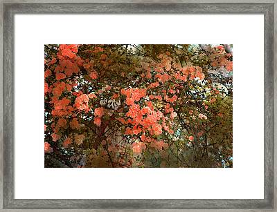 Rose 180 Framed Print by Pamela Cooper