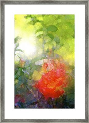 Rose 190 Framed Print by Pamela Cooper