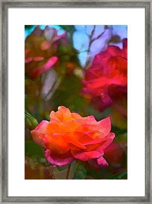Rose 191 Framed Print by Pamela Cooper