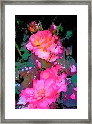 Rose 193 Framed Print by Pamela Cooper