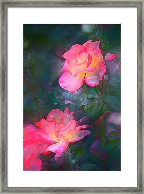 Rose 194 Framed Print by Pamela Cooper