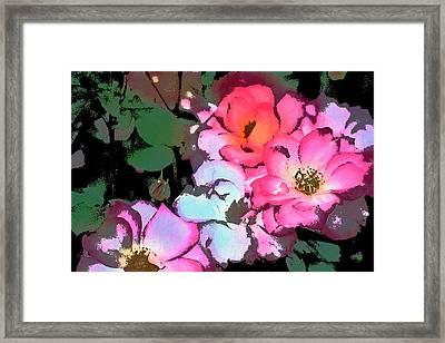 Rose 197 Framed Print by Pamela Cooper