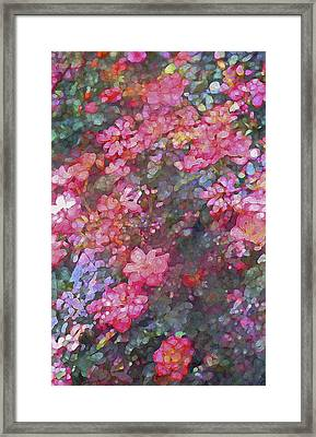 Rose 199 Framed Print by Pamela Cooper