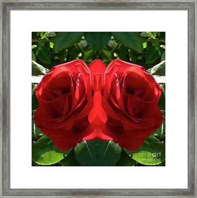 Valentine Rose  Framed Print by Johannes Murat