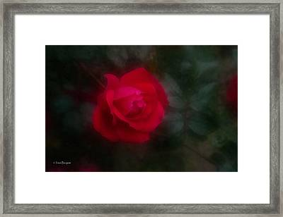 Framed Print featuring the photograph Rose 2 by Travis Burgess