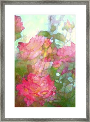 Rose 200 Framed Print by Pamela Cooper