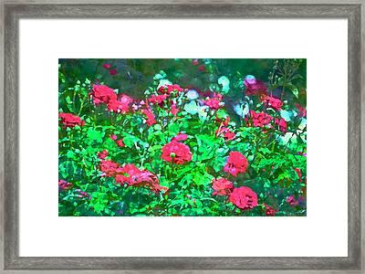 Rose 201 Framed Print by Pamela Cooper