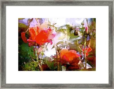 Rose 204 Framed Print by Pamela Cooper