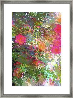 Rose 207 Framed Print by Pamela Cooper