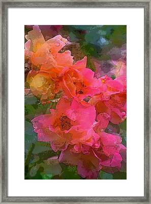 Rose 219 Framed Print by Pamela Cooper