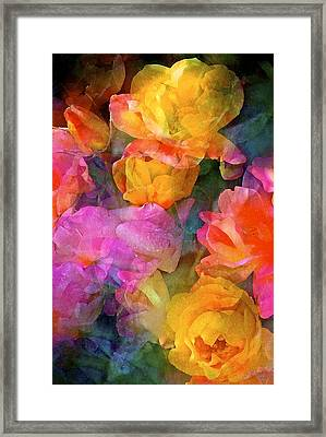 Rose 224 Framed Print by Pamela Cooper