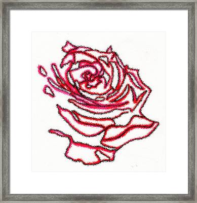 Rose 3 Framed Print by Christine Perry