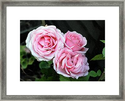 Framed Print featuring the photograph Rose 3 by Helene U Taylor
