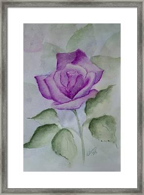 Rose 3 Framed Print by Nancy Edwards