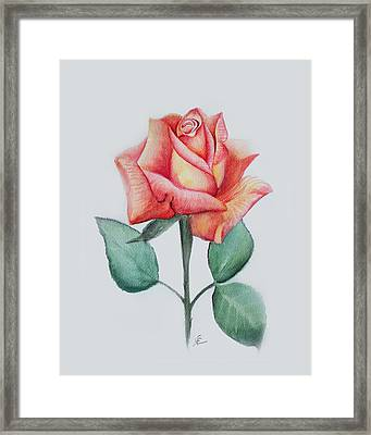 Rose 4 Framed Print by Nancy Edwards