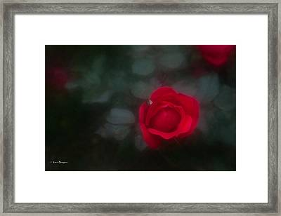 Framed Print featuring the photograph Rose 4 by Travis Burgess