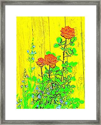 Rose 9 Framed Print by Pamela Cooper