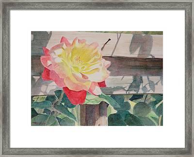 Rose Aglow Framed Print