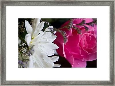 Rose And Daisy Framed Print by John Holloway