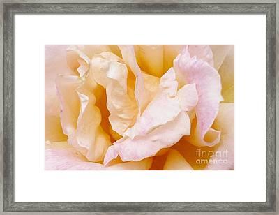 Rose Au Naturale Framed Print