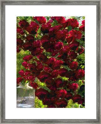 Rose Avalanche Framed Print