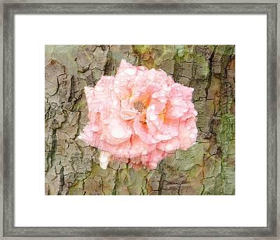 Framed Print featuring the photograph Rose Bark by Amanda Eberly-Kudamik