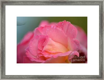 Rose Beauty Framed Print by Marsha Schorer
