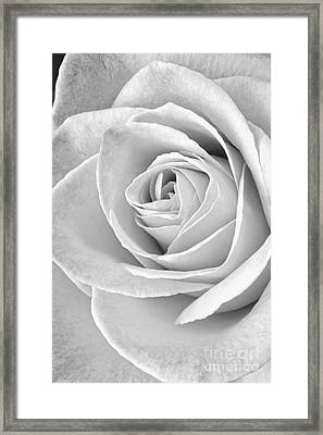 Rose Black And White Framed Print by Edward Fielding