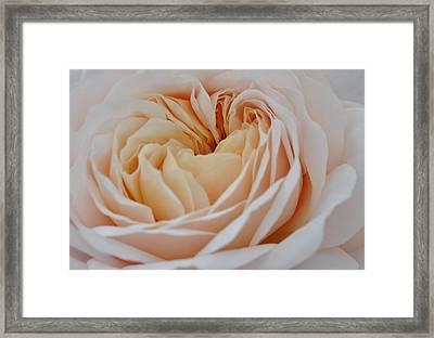Rose Blush Framed Print by Sabine Edrissi