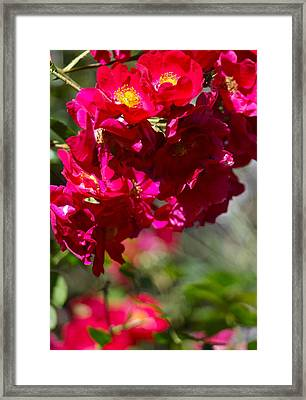 Framed Print featuring the photograph Rose Bouquet by Michele Myers