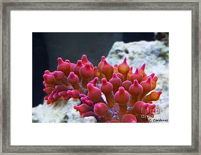 Rose Bubbles Framed Print by Rebecca Christine Cardenas