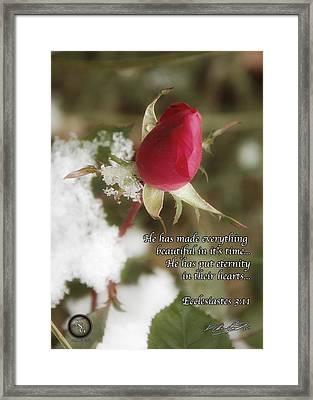Rose Bud In Snow Framed Print