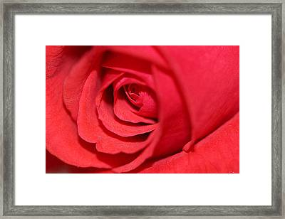 Rose Bud Framed Print by Lorella  Schoales
